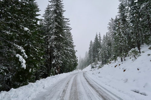 Snow cobvered mountain rd with pine trees